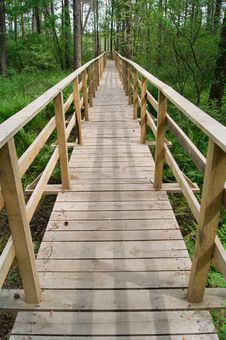 Free Footbridge Over The Swamp Royalty Free Stock Photo - 19818815