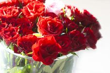 Free Red Roses Royalty Free Stock Image - 19818846