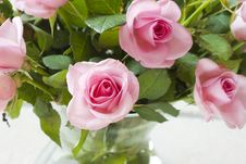 Free Pink Roses Stock Photo - 19818870