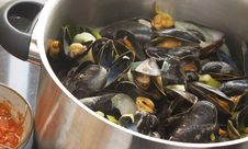 Free Mussels Stock Photo - 19818920