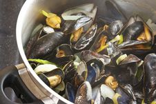 Free Mussels Stock Image - 19818951