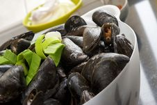Free Mussels Royalty Free Stock Images - 19818969
