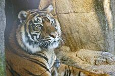 Free Tiger Close-up Stock Image - 19819271
