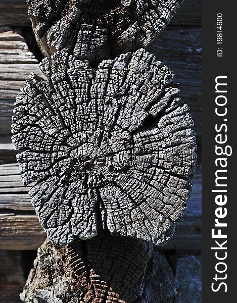 Old butt logs texture