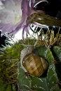 Free Snail On Cactus Stock Photos - 19822003