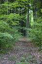 Free Forest Path Royalty Free Stock Image - 19827356