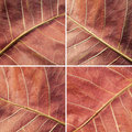 Free Set Of Autumn Leaves Stock Images - 19828844