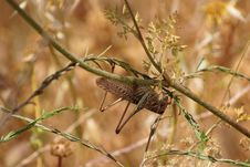 Free Locust On The Flower Stem Upside Down Stock Photography - 19820022