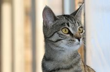 Free Cat Portrait Royalty Free Stock Photos - 19820498