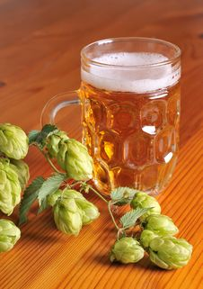 Beer And Hops Royalty Free Stock Photo