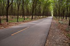 Free Country Road In Rubber Tree Garden Royalty Free Stock Images - 19821809