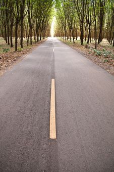 Free Country Road In Rubber Tree Garden Stock Photography - 19821882