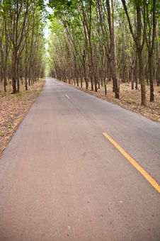 Free Country Road In Rubber Tree Garden Royalty Free Stock Photography - 19821927