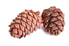 Free Two Pine Cones Stock Image - 19821931