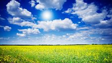 Free Vibrant Rapefield And Cloudscape. Stock Image - 19822651