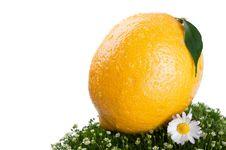 Free Fresh Lemon On A Green Grass Royalty Free Stock Image - 19824196