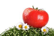 Fresh Tomato On A Green Grass Royalty Free Stock Photo
