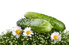 Fresh Cucumber On A Green Grass Royalty Free Stock Photos