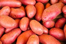 Free Red Potatoes Stock Photography - 19824482