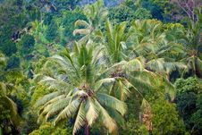 Palms And Jungles Royalty Free Stock Photos