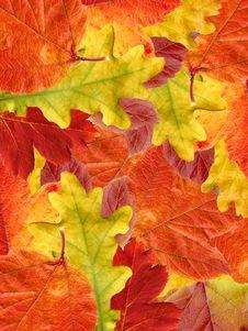 Free Leaf Autumn. Royalty Free Stock Photos - 19825438