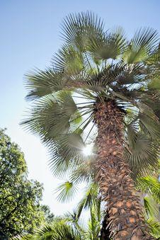 Free Sunny Tropics. Royalty Free Stock Images - 19825559