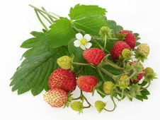 Free Wild Strawberries Stock Images - 19826444