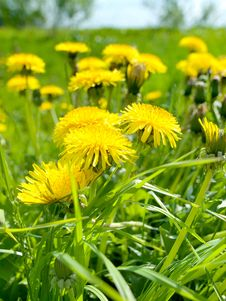 Free Summer Meadow Royalty Free Stock Photography - 19827467