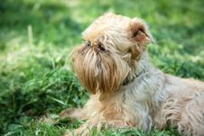 Free Dog On Walk In The Summer Stock Photography - 19827652