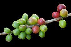 Free Coffee Beans Royalty Free Stock Photo - 19828705