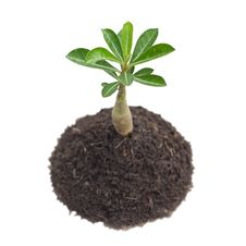 Free Young Tree In Plant Stock Images - 19828854