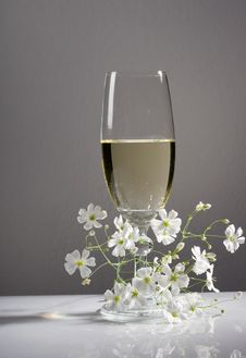 Free Glass Of White Wine Royalty Free Stock Image - 19829816