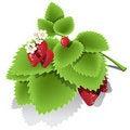 Free Strawberry Stock Photos - 19832433