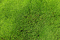 Free Grass Field Royalty Free Stock Image - 19832646
