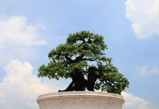 Free Green Bonsai Tree Stock Photography - 19830732