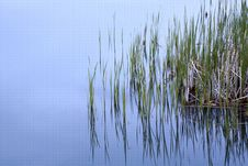 Free Grass Sticking Out Of Water. Stock Image - 19831371