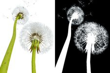 Free 3d Dandelions Stock Photography - 19832322