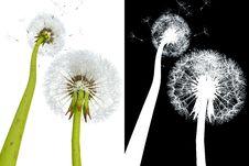 3d Dandelions Stock Photography