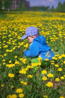 Little Boy Through Dandelions Royalty Free Stock Photos