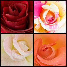Free Roses Collage Stock Images - 19832594