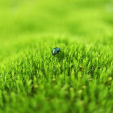 Free Green Beetle Stock Images - 19832684