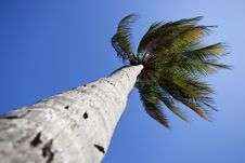 Free Palme Tree And Tropical Blue Sky Stock Photos - 19833893