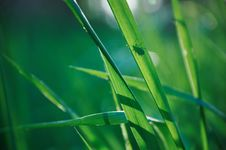 Free Silhouette  Of A Bug On A Green Grass Stock Images - 19834464