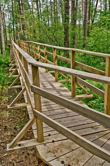 Free Footbridge Over The Swamp 2 Royalty Free Stock Photography - 19835137