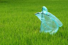 Free Scarecrow In The Rice Field Royalty Free Stock Photography - 19836137