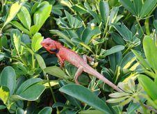 Free Lizard Among Leaf Stock Image - 19836711
