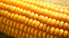 Free Sweet Corn Royalty Free Stock Images - 19837209