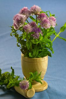 Free Blooming Chives And Mint Royalty Free Stock Image - 19838296