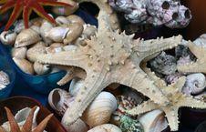 Free Starfish Stock Photography - 19838492