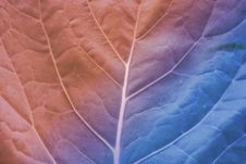 Free Leaf Royalty Free Stock Photos - 19838748
